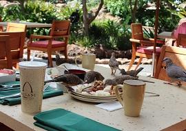 マカヒキの鳥の写真