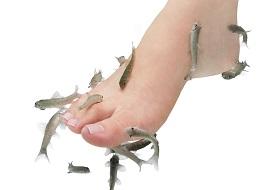 大江戸温泉物語浦安万華鏡のドクターフィッシュ(画像引用元:楽天トラベル)